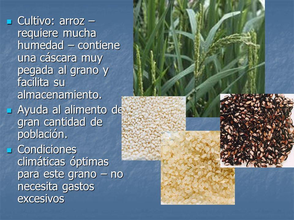 Cultivo: arroz – requiere mucha humedad – contiene una cáscara muy pegada al grano y facilita su almacenamiento. Cultivo: arroz – requiere mucha humed