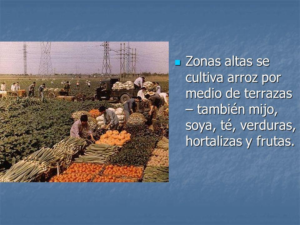 Zonas altas se cultiva arroz por medio de terrazas – también mijo, soya, té, verduras, hortalizas y frutas. Zonas altas se cultiva arroz por medio de