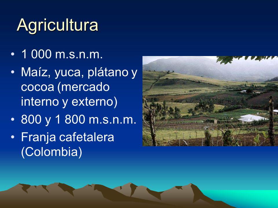 Agricultura 1 000 m.s.n.m. Maíz, yuca, plátano y cocoa (mercado interno y externo) 800 y 1 800 m.s.n.m. Franja cafetalera (Colombia)