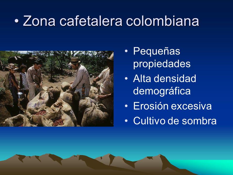 Zona cafetalera colombianaZona cafetalera colombiana Pequeñas propiedades Alta densidad demográfica Erosión excesiva Cultivo de sombra