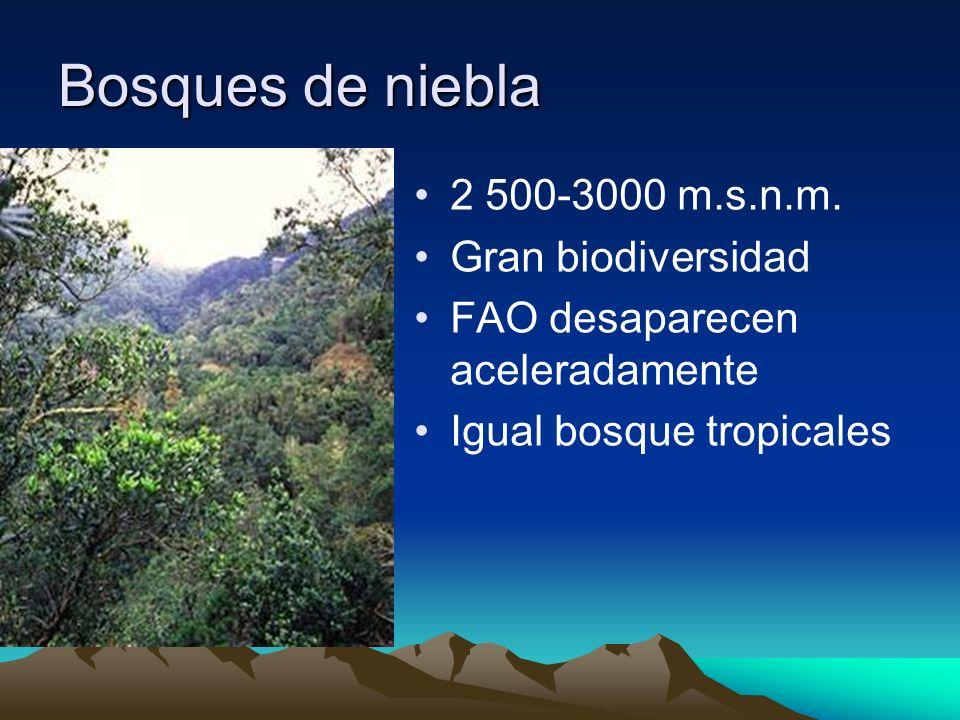 2 500-3000 m.s.n.m. Gran biodiversidad FAO desaparecen aceleradamente Igual bosque tropicales Bosques de niebla