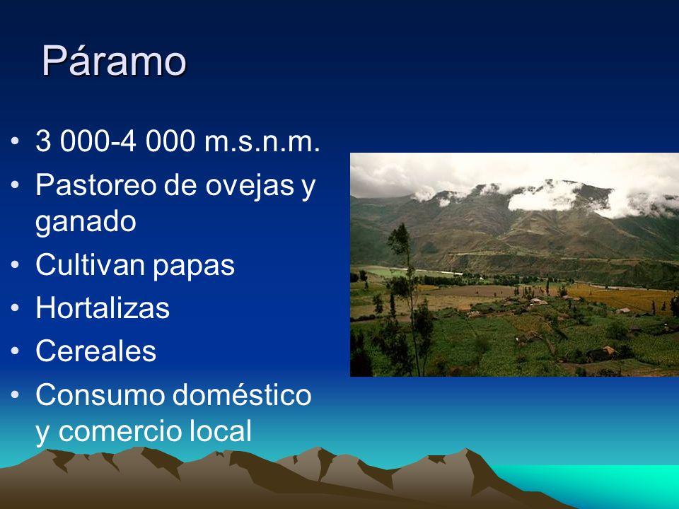 Páramo 3 000-4 000 m.s.n.m. Pastoreo de ovejas y ganado Cultivan papas Hortalizas Cereales Consumo doméstico y comercio local