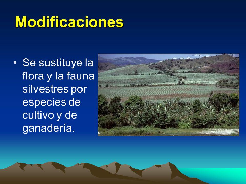 Abundan recursos minerales sin explotar Enorme potencial hidroeléctrico Industria turística