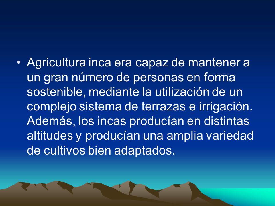 Agricultura inca era capaz de mantener a un gran número de personas en forma sostenible, mediante la utilización de un complejo sistema de terrazas e