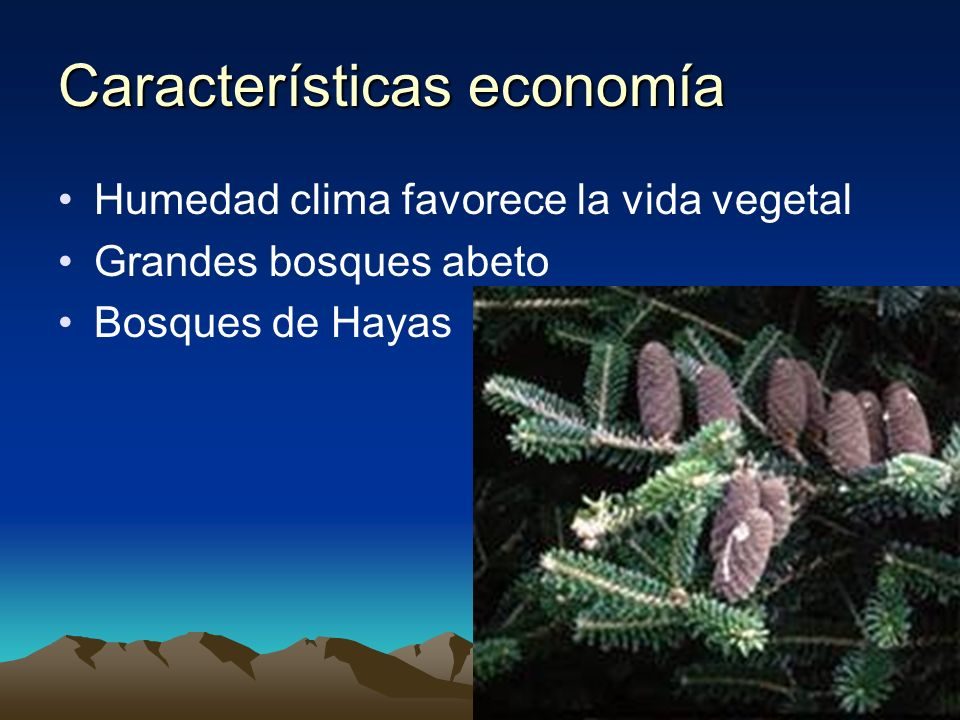 Características economía Humedad clima favorece la vida vegetal Grandes bosques abeto Bosques de Hayas
