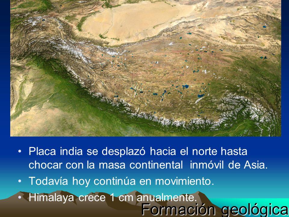 Placa india se desplazó hacia el norte hasta chocar con la masa continental inmóvil de Asia. Todavía hoy continúa en movimiento. Himalaya crece 1 cm a