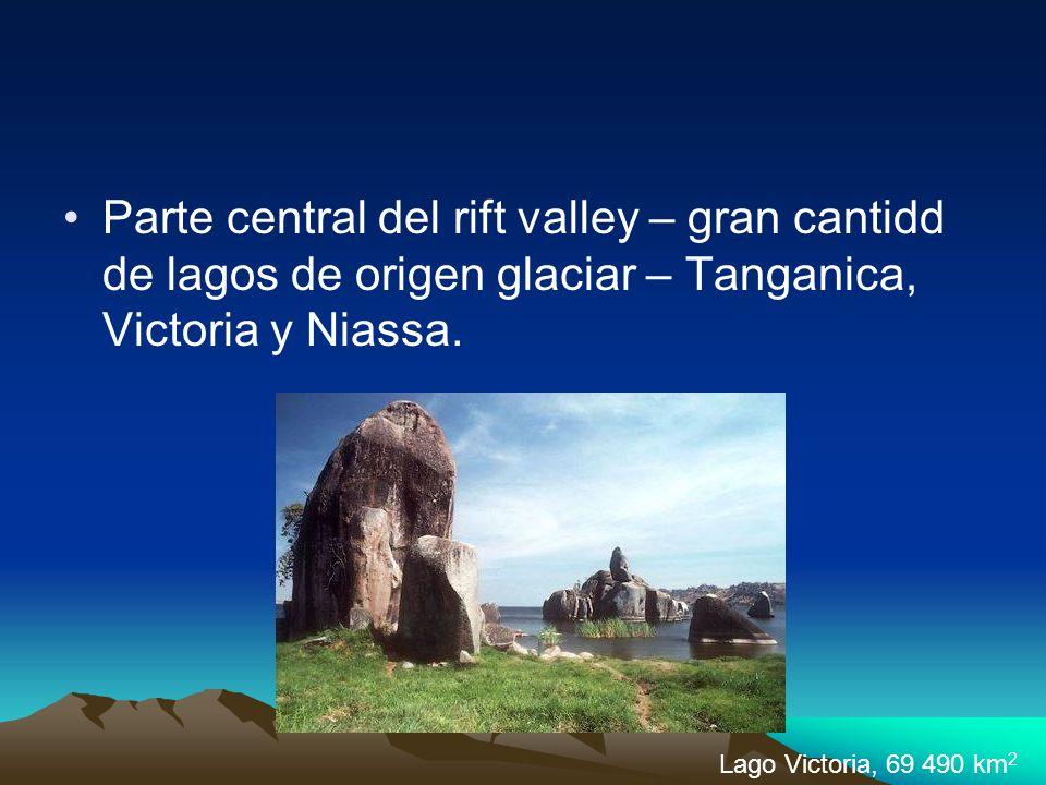 Parte central del rift valley – gran cantidd de lagos de origen glaciar – Tanganica, Victoria y Niassa. Lago Victoria, 69 490 km 2