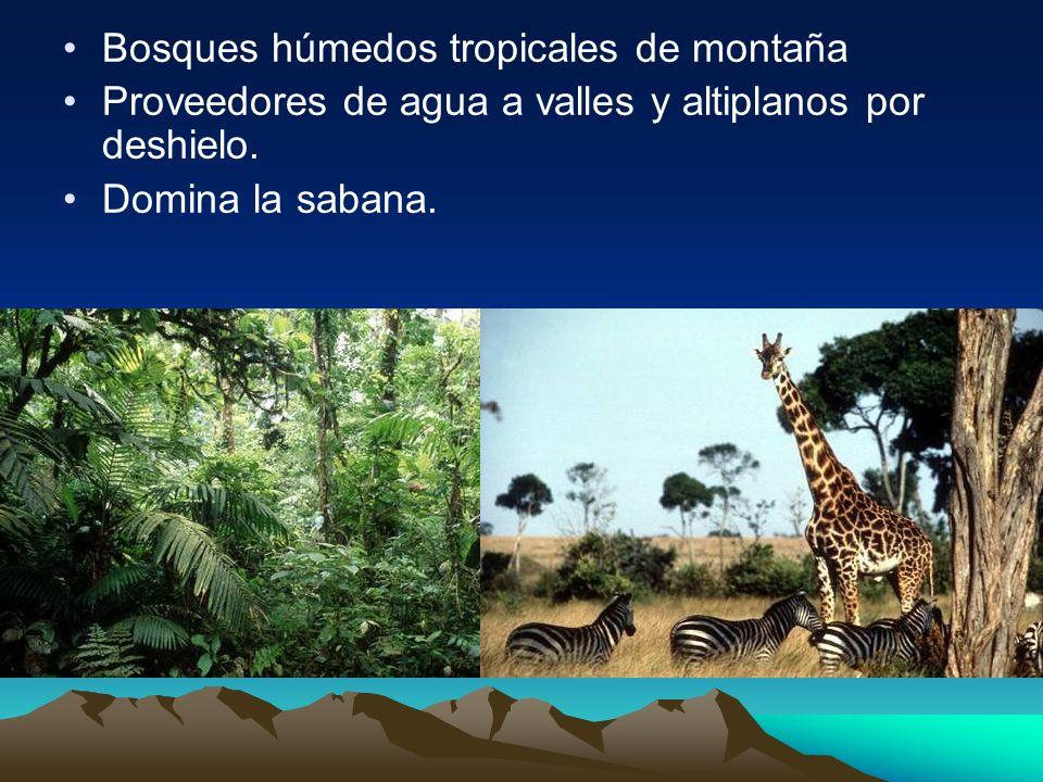 Bosques húmedos tropicales de montaña Proveedores de agua a valles y altiplanos por deshielo. Domina la sabana.