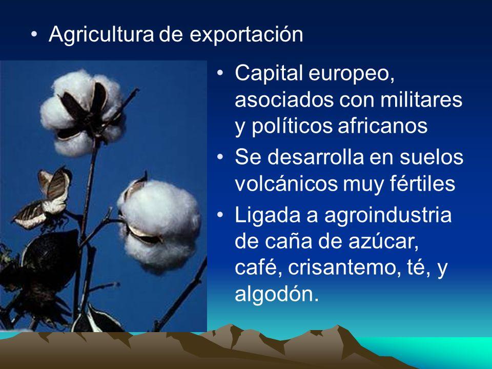 Agricultura de exportación Capital europeo, asociados con militares y políticos africanos Se desarrolla en suelos volcánicos muy fértiles Ligada a agr