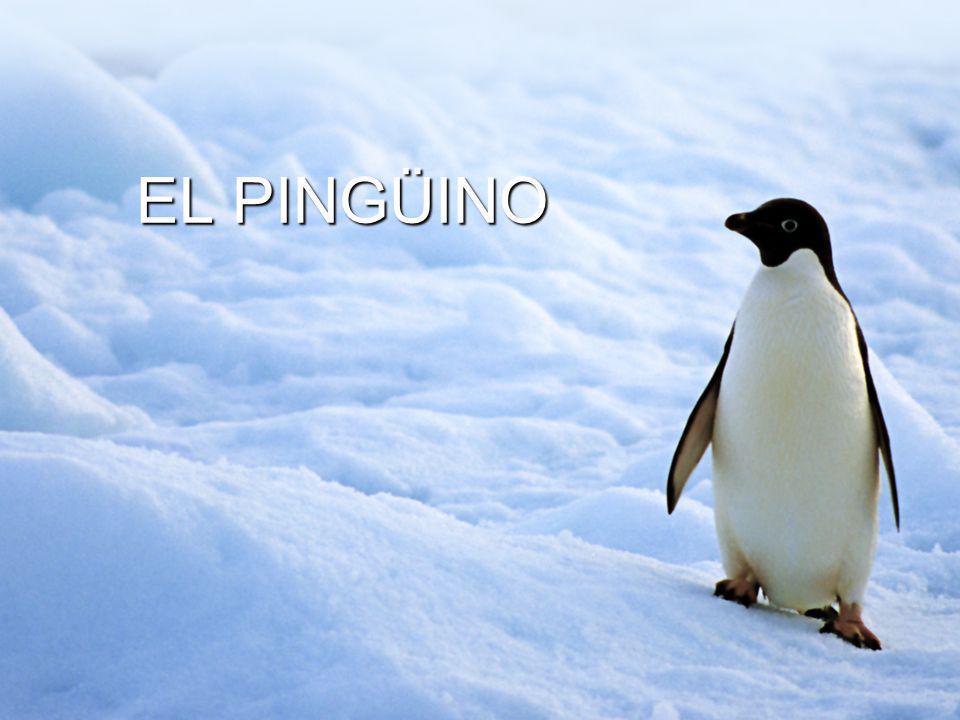 EL PINGÜINO EL PINGÜINO