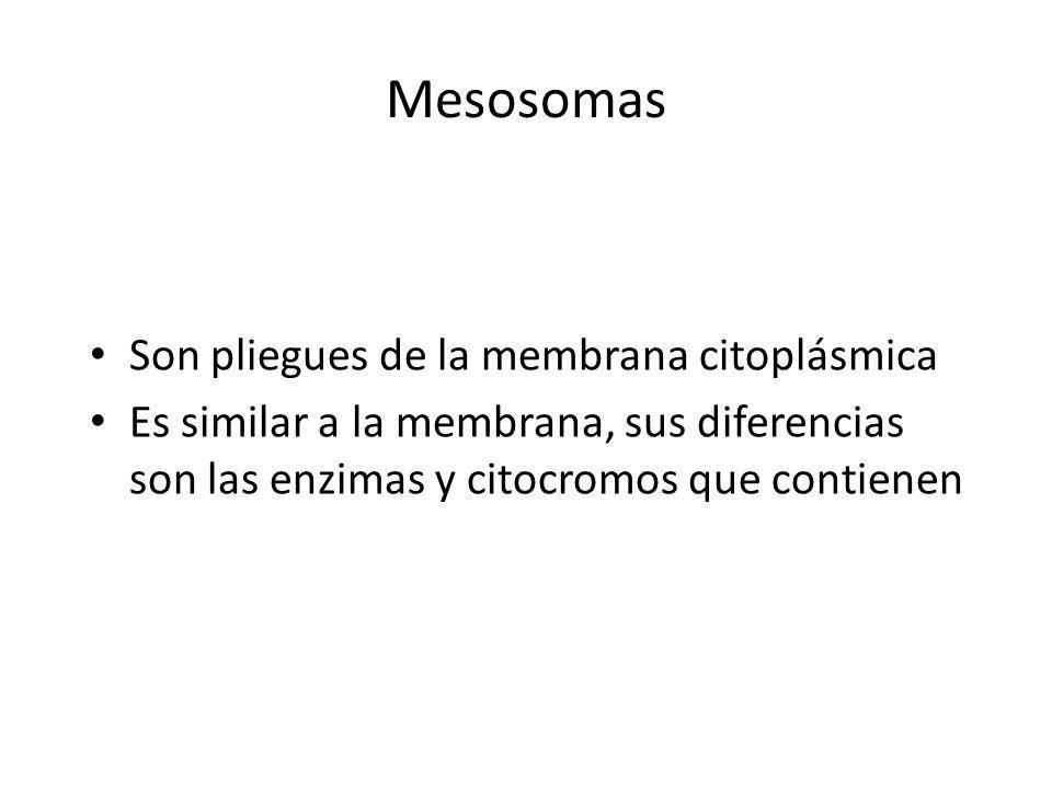 Mesosomas Son pliegues de la membrana citoplásmica Es similar a la membrana, sus diferencias son las enzimas y citocromos que contienen