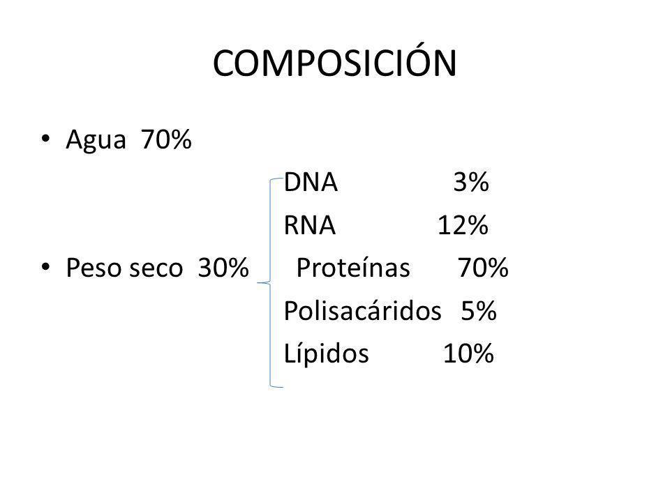 COMPOSICIÓN Agua 70% DNA 3% RNA 12% Peso seco 30% Proteínas 70% Polisacáridos 5% Lípidos 10%