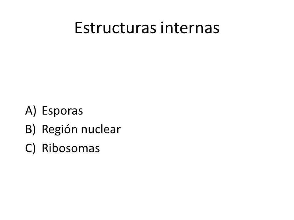 Estructuras internas A)Esporas B)Región nuclear C)Ribosomas