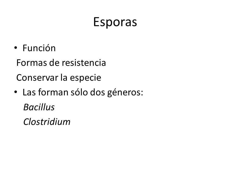 Esporas Función Formas de resistencia Conservar la especie Las forman sólo dos géneros: Bacillus Clostridium