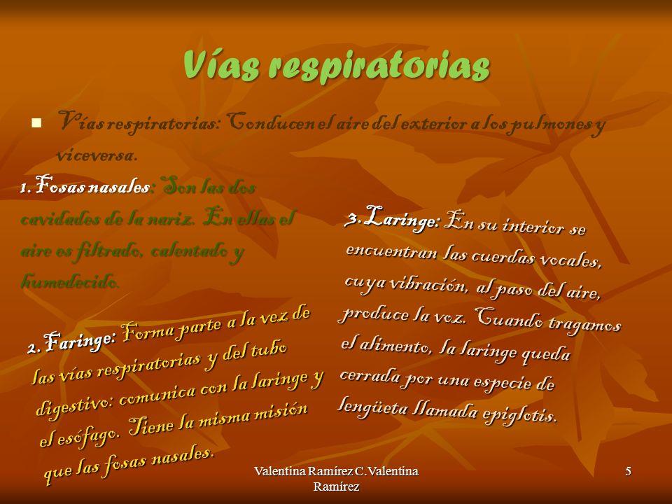Vías respiratorias Vías respiratorias: Conducen el aire del exterior a los pulmones y viceversa. Valentina Ramírez C.Valentina Ramírez 5 2.Faringe: Fo