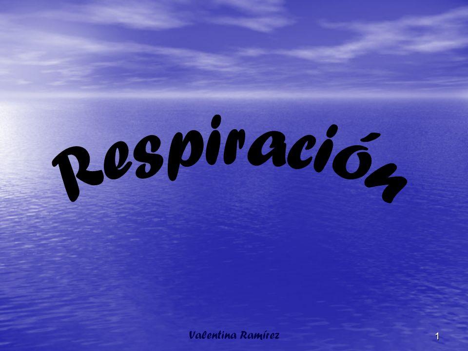 Respiramos unas 17 veces por minuto y cada vez introducimos en la respiración normal ½ litro de aire.