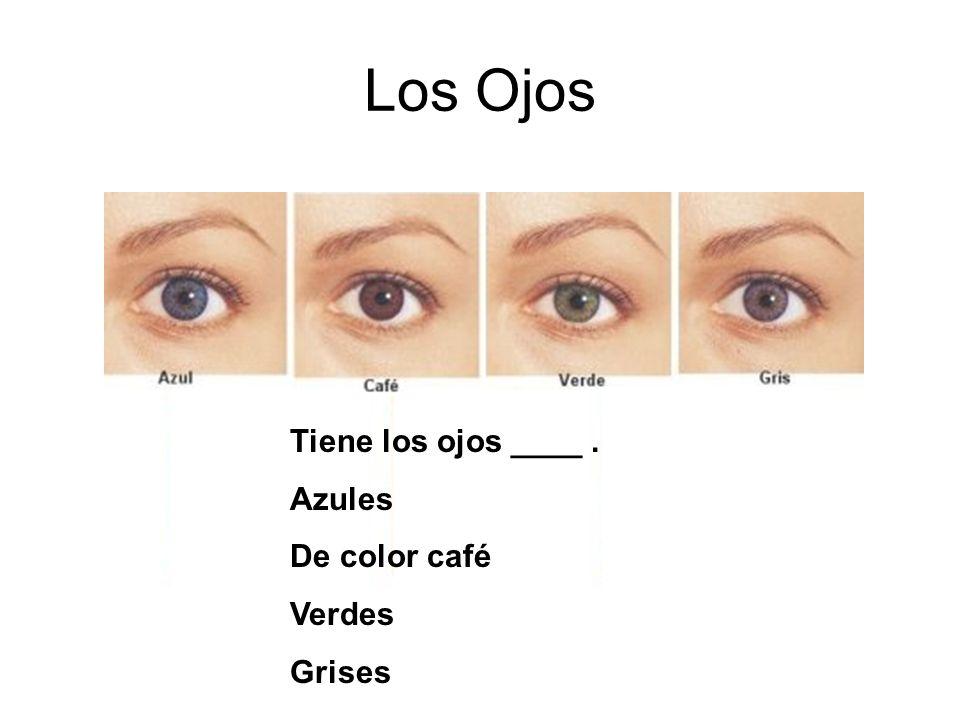 Los Ojos Tiene los ojos ____. Azules De color café Verdes Grises