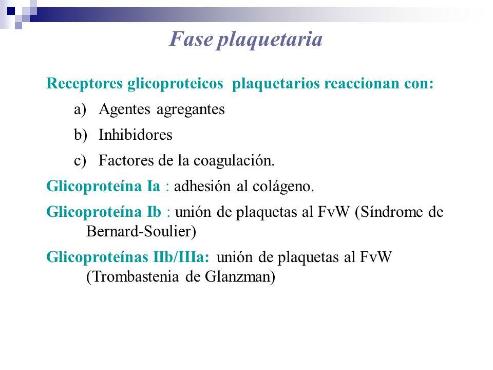 Receptores glicoproteicos plaquetarios reaccionan con: a)Agentes agregantes b)Inhibidores c)Factores de la coagulación. Glicoproteína Ia : adhesión al