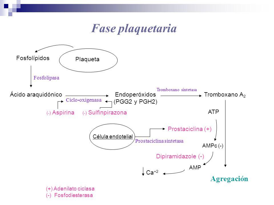 Fase plaquetaria Fosfolípidos Ácido araquidónicoEndoperóxidos (PGG2 y PGH2) Fosfolipasa Tromboxano A 2 Agregación (-) Aspirina Ciclo-oxigenasa Trombox