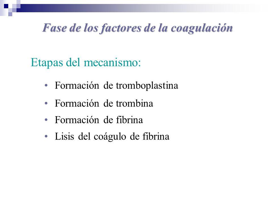 Fase de los factores de la coagulación Etapas del mecanismo: Formación de tromboplastina Formación de trombina Formación de fibrina Lisis del coágulo