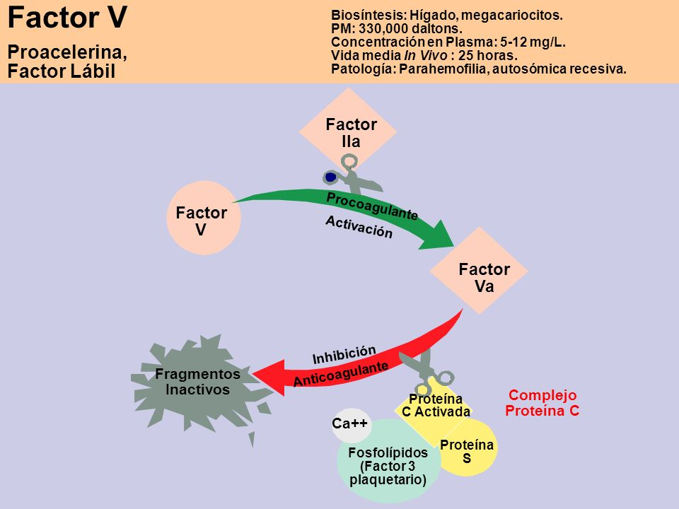 Factor V Proacelerina, Factor Lábil Biosíntesis: Hígado, megacariocitos. PM: 330,000 daltons. Concentración en Plasma: 5-12 mg/L. Vida media In Vivo :