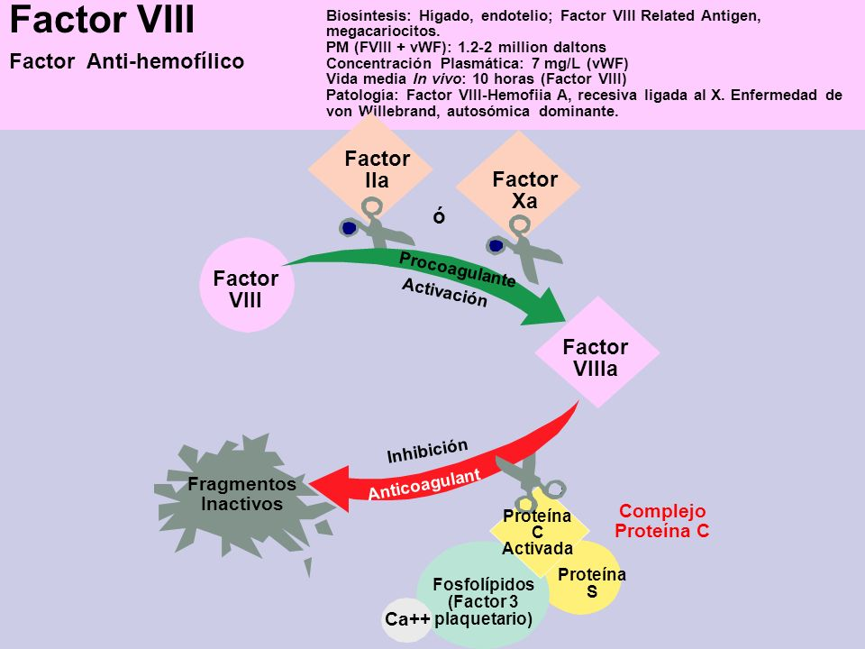 Factor VIII Factor Anti-hemofílico Biosíntesis: Hígado, endotelio; Factor VIII Related Antigen, megacariocitos. PM (FVIII + vWF): 1.2-2 million dalton