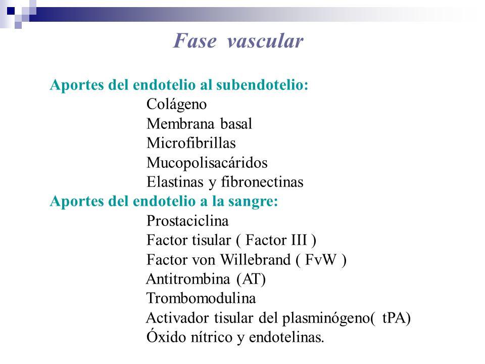Fase vascular Aportes del endotelio al subendotelio: Colágeno Membrana basal Microfibrillas Mucopolisacáridos Elastinas y fibronectinas Aportes del en