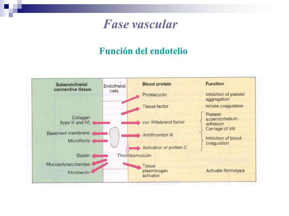 Fase plaquetaria Etapas de la fase plaquetaria: 1) Adhesión 2) Agregación 3) Liberación 4) Retracción del coágulo
