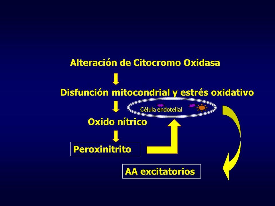 Alteración de Citocromo Oxidasa Disfunción mitocondrial y estrés oxidativo Oxido nítrico Célula endotelial Peroxinitrito AA excitatorios