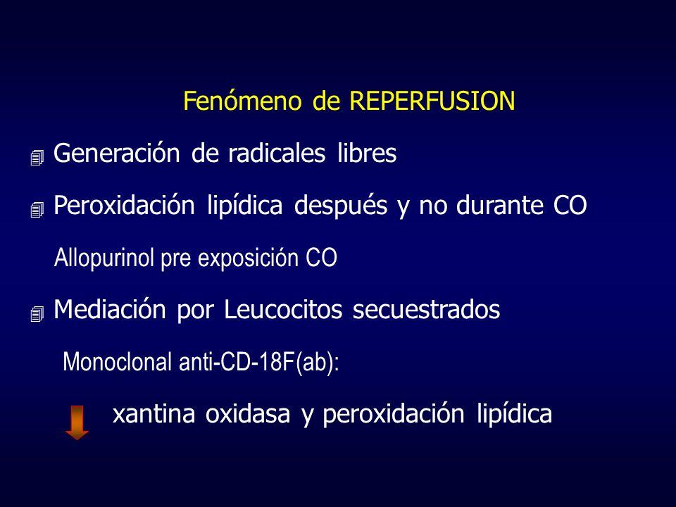 Fenómeno de REPERFUSION 4 Generación de radicales libres 4 Peroxidación lipídica después y no durante CO Allopurinol pre exposición CO 4 Mediación por