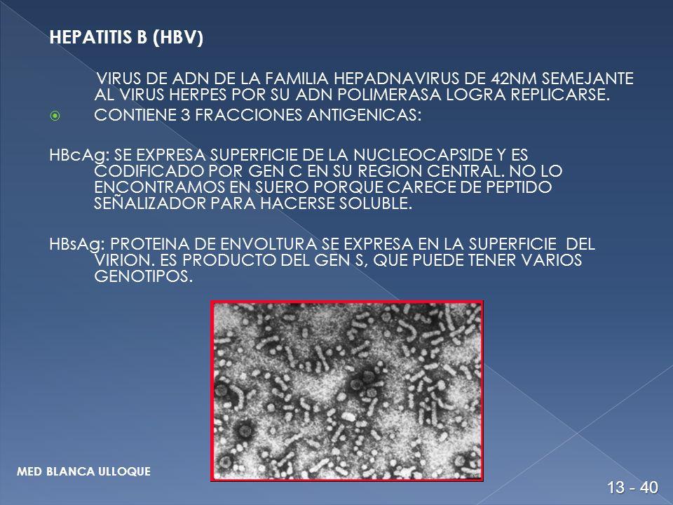 HEPATITIS B (HBV ) VIRUS DE ADN DE LA FAMILIA HEPADNAVIRUS DE 42NM SEMEJANTE AL VIRUS HERPES POR SU ADN POLIMERASA LOGRA REPLICARSE.