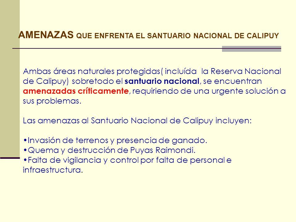 AMENAZAS QUE ENFRENTA EL SANTUARIO NACIONAL DE CALIPUY Ambas áreas naturales protegidas( incluída la Reserva Nacional de Calipuy) sobretodo el santuar