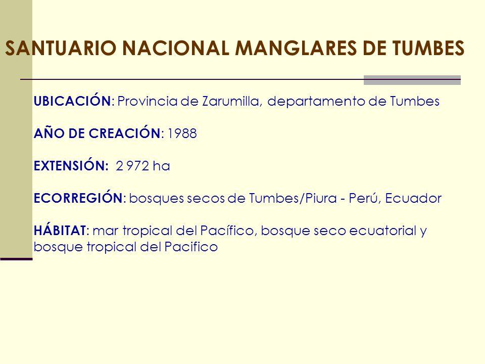 SANTUARIO NACIONAL MANGLARES DE TUMBES UBICACIÓN : Provincia de Zarumilla, departamento de Tumbes AÑO DE CREACIÓN : 1988 EXTENSIÓN: 2 972 ha ECORREGIÓ