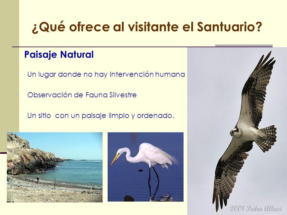 ¿Qué ofrece al visitante el Santuario? Paisaje Natural - Un lugar donde no hay intervención humana - Observación de Fauna Silvestre - Un sitio con un
