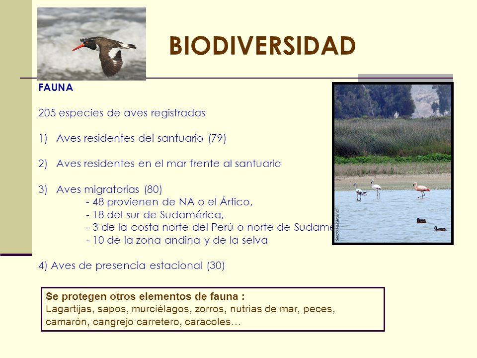 BIODIVERSIDAD FAUNA 205 especies de aves registradas 1)Aves residentes del santuario (79) 2)Aves residentes en el mar frente al santuario 3)Aves migra