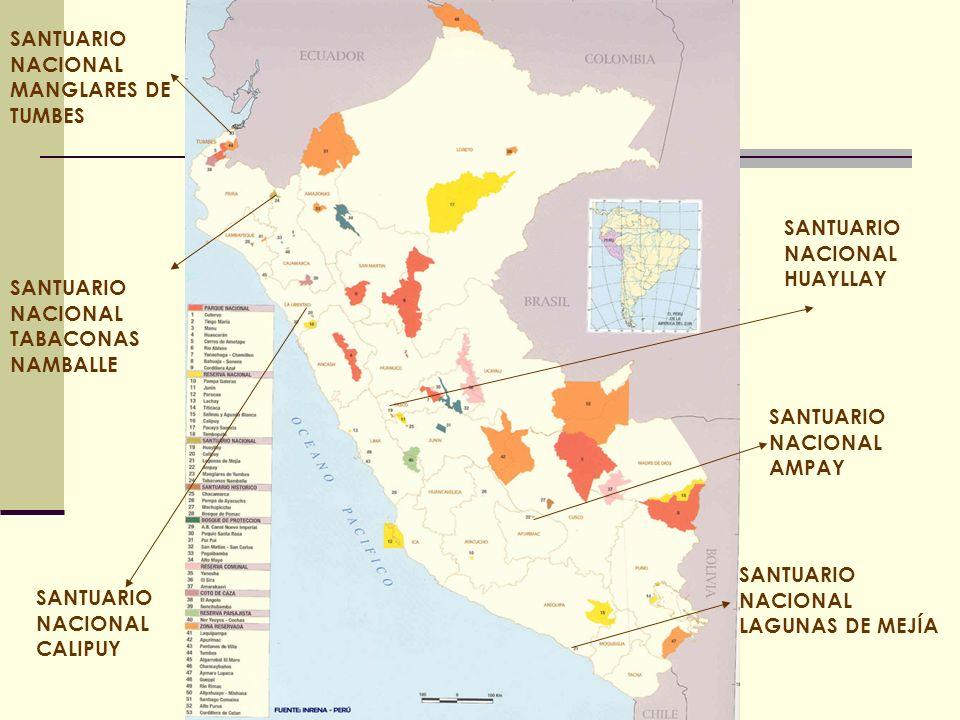 SANTUARIO NACIONAL HUAYLLAY SANTUARIO NACIONAL CALIPUY SANTUARIO NACIONAL TABACONAS NAMBALLE SANTUARIO NACIONAL MANGLARES DE TUMBES SANTUARIO NACIONAL