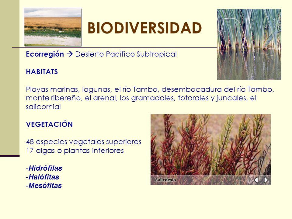 BIODIVERSIDAD Ecorregión Desierto Pacífico Subtropical HABITATS Playas marinas, lagunas, el río Tambo, desembocadura del río Tambo, monte ribereño, el