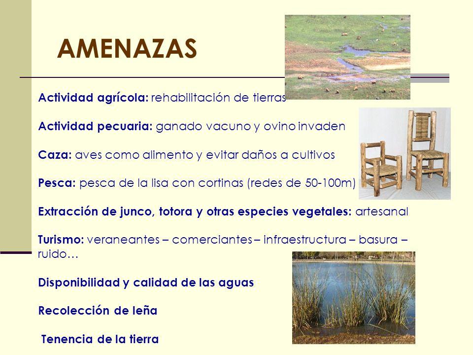 AMENAZAS Actividad agrícola: rehabilitación de tierras Actividad pecuaria: ganado vacuno y ovino invaden Caza: aves como alimento y evitar daños a cul