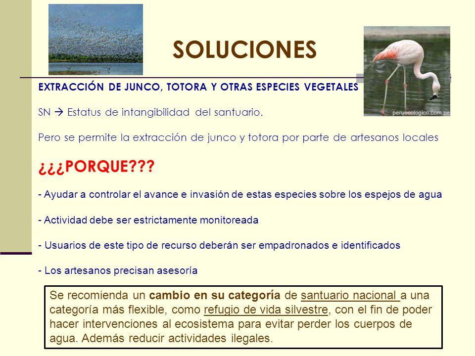 SOLUCIONES EXTRACCIÓN DE JUNCO, TOTORA Y OTRAS ESPECIES VEGETALES SN Estatus de intangibilidad del santuario. Pero se permite la extracción de junco y