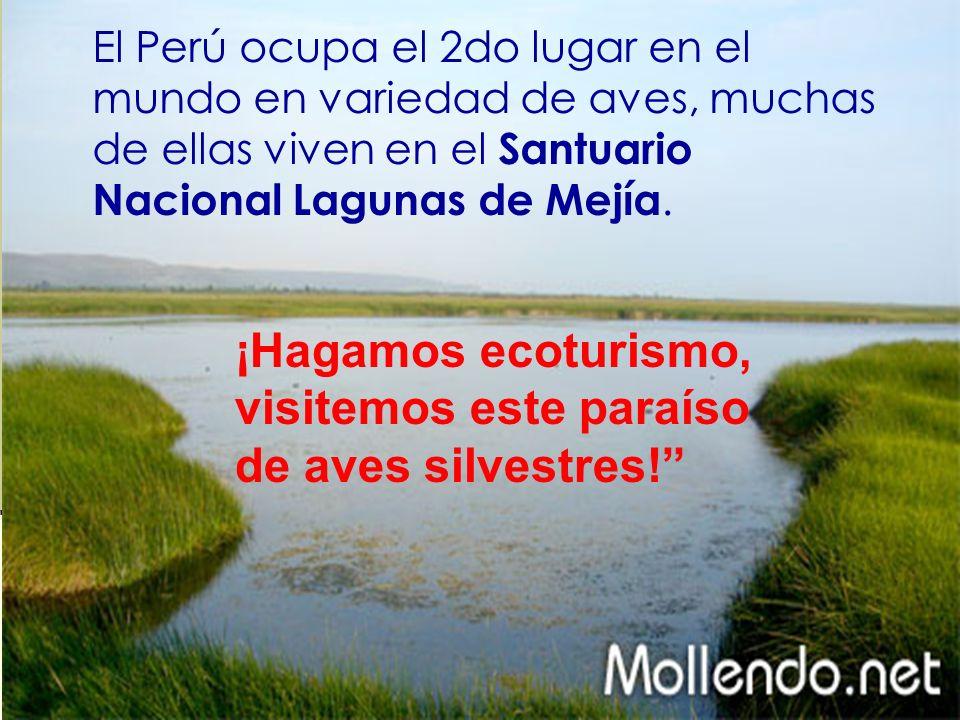 El Perú ocupa el 2do lugar en el mundo en variedad de aves, muchas de ellas viven en el Santuario Nacional Lagunas de Mejía. ¡Hagamos ecoturismo, visi