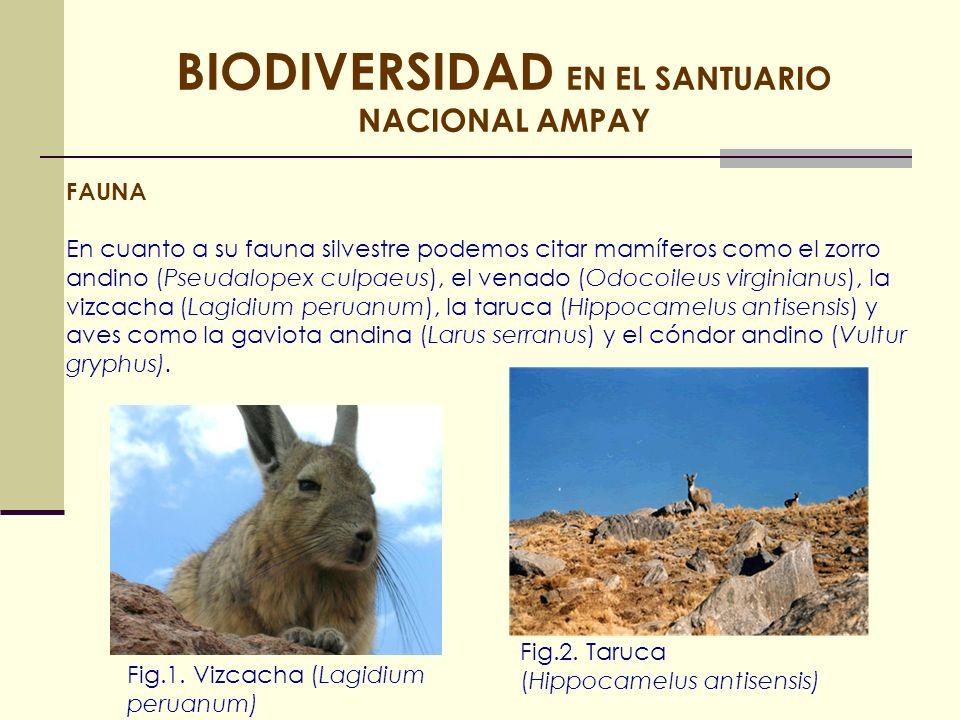 FAUNA En cuanto a su fauna silvestre podemos citar mamíferos como el zorro andino (Pseudalopex culpaeus), el venado (Odocoileus virginianus), la vizca