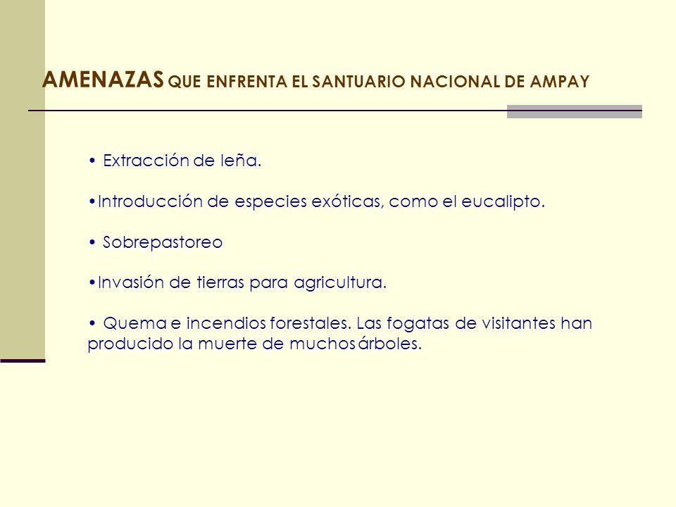 AMENAZAS QUE ENFRENTA EL SANTUARIO NACIONAL DE AMPAY Extracción de leña. Introducción de especies exóticas, como el eucalipto. Sobrepastoreo Invasión
