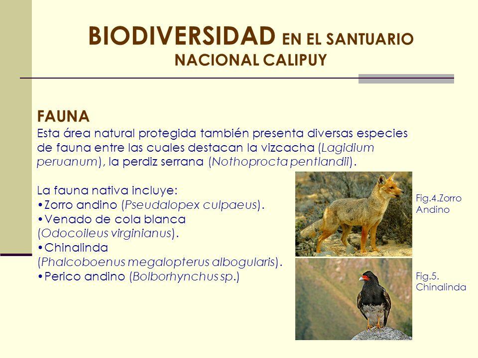 BIODIVERSIDAD EN EL SANTUARIO NACIONAL CALIPUY FAUNA Esta área natural protegida también presenta diversas especies de fauna entre las cuales destacan