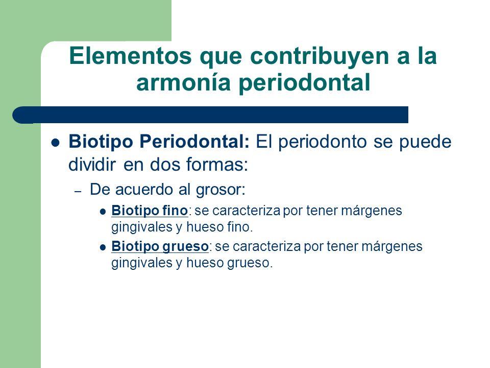 Elementos que contribuyen a la armonía periodontal Biotipo Periodontal: El periodonto se puede dividir en dos formas: – De acuerdo al grosor: Biotipo fino: se caracteriza por tener márgenes gingivales y hueso fino.