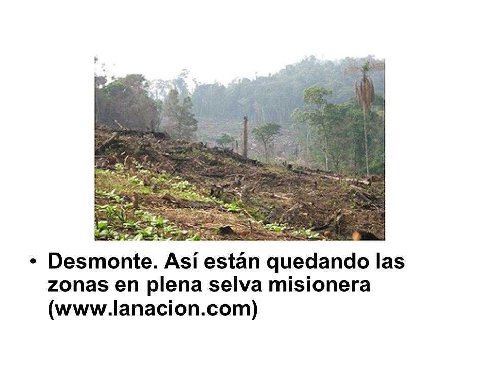 Desmonte. Así están quedando las zonas en plena selva misionera (www.lanacion.com)