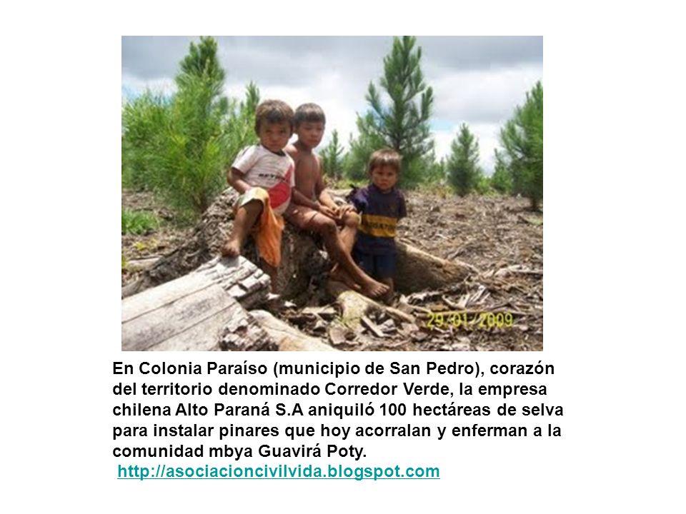 En Colonia Paraíso (municipio de San Pedro), corazón del territorio denominado Corredor Verde, la empresa chilena Alto Paraná S.A aniquiló 100 hectáre