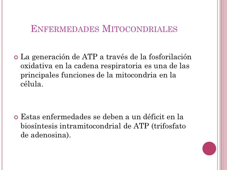 E NFERMEDADES M ITOCONDRIALES La generación de ATP a través de la fosforilación oxidativa en la cadena respiratoria es una de las principales funcione