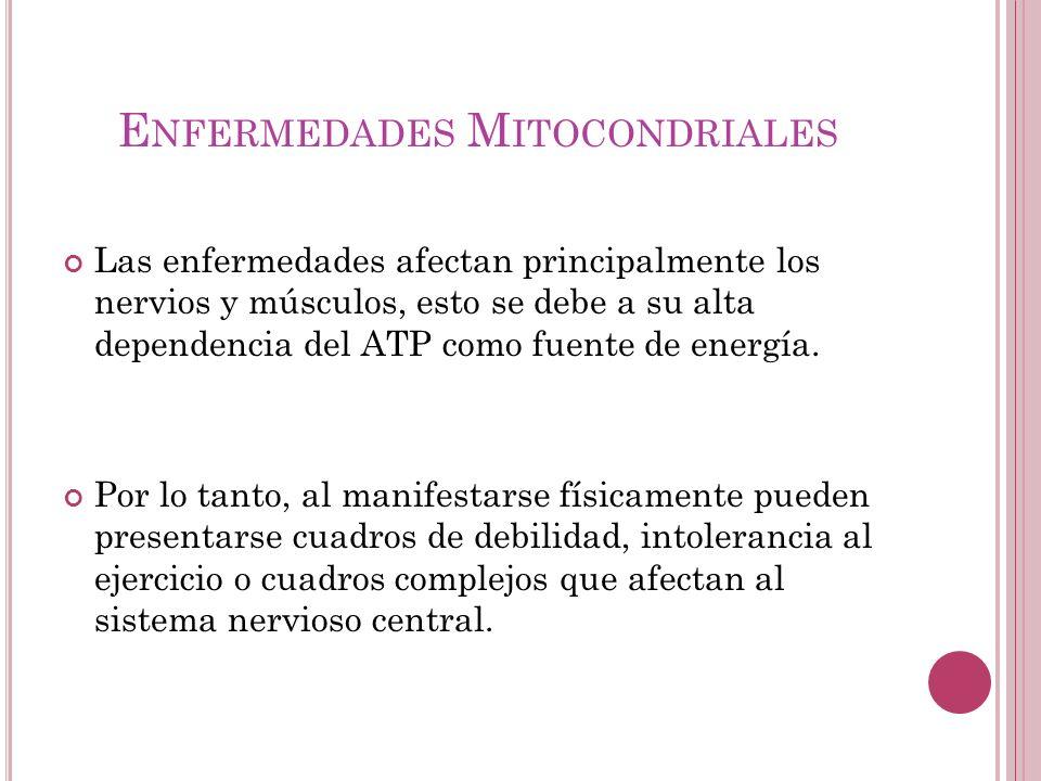E NFERMEDADES M ITOCONDRIALES Las enfermedades afectan principalmente los nervios y músculos, esto se debe a su alta dependencia del ATP como fuente d
