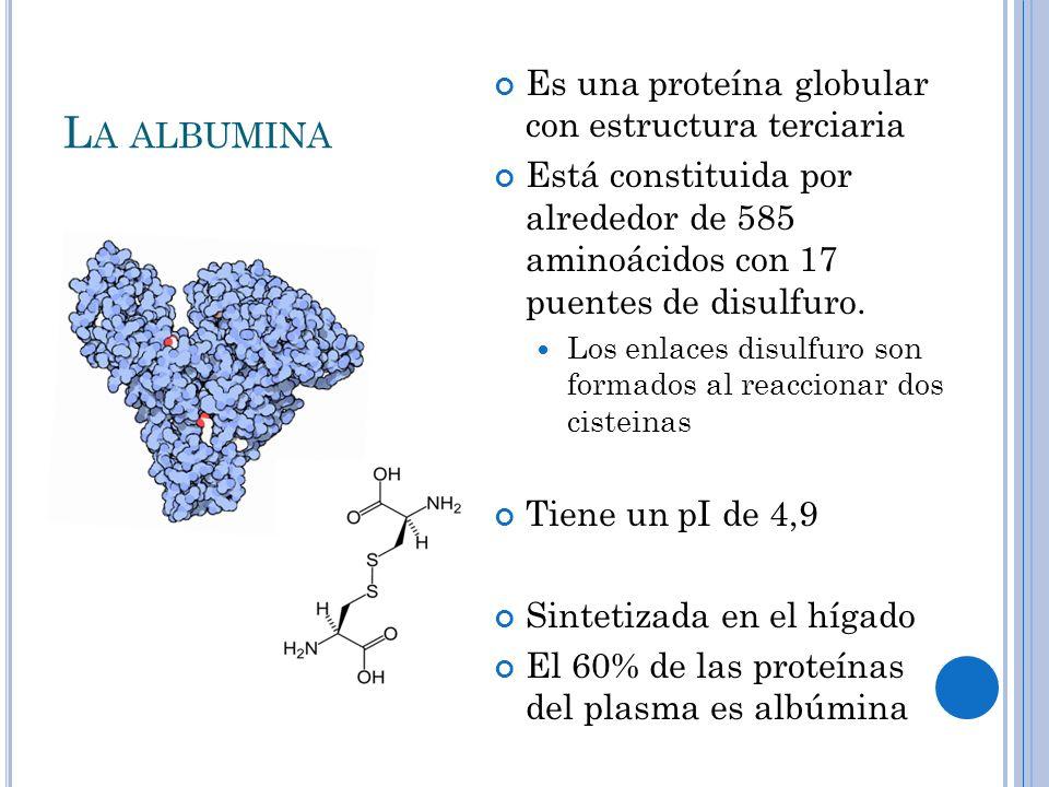 L A ALBUMINA Es una proteína globular con estructura terciaria Está constituida por alrededor de 585 aminoácidos con 17 puentes de disulfuro. Los enla