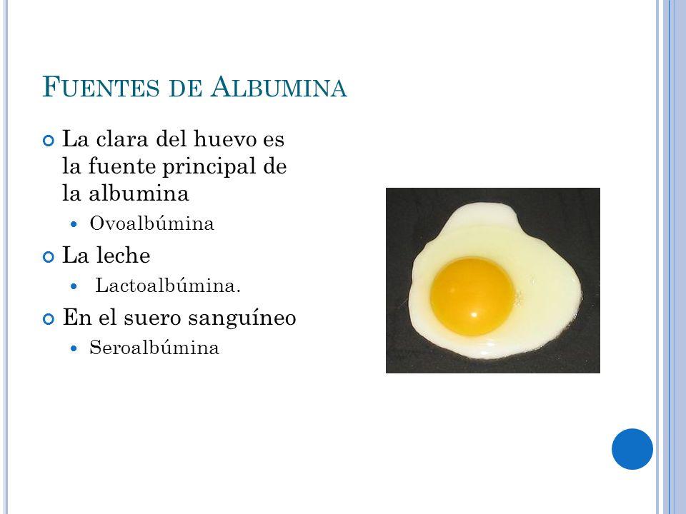 F UENTES DE A LBUMINA La clara del huevo es la fuente principal de la albumina Ovoalbúmina La leche Lactoalbúmina. En el suero sanguíneo Seroalbúmina